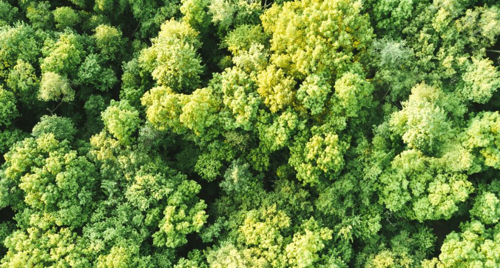 MM plants 1000 trees